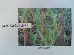 0615yugafukan.JPG